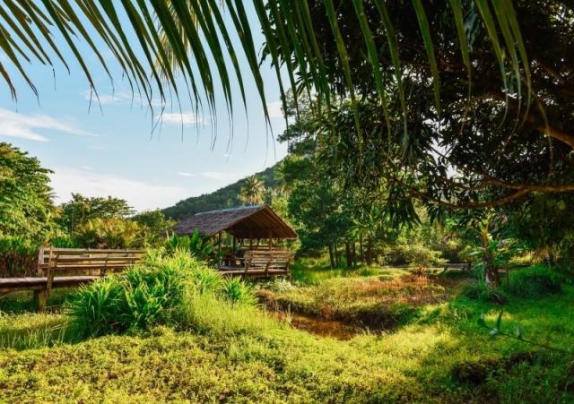 nature-trees-hut-resort